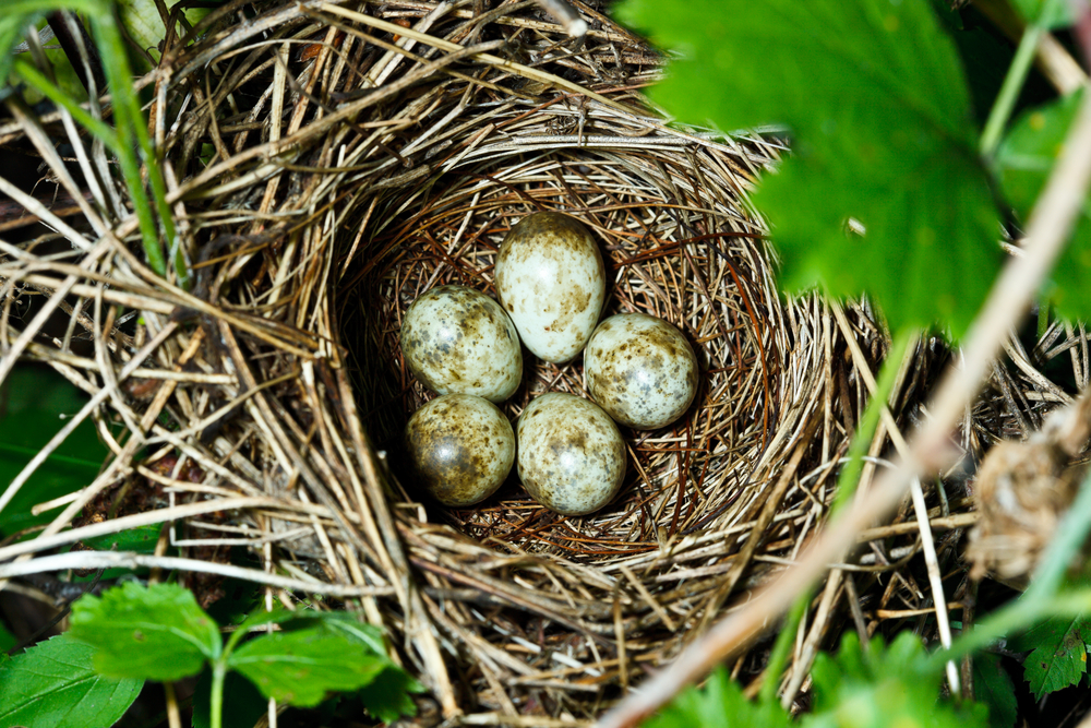Schutz von Brutvögeln